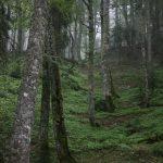 Rezervat Kaljavica