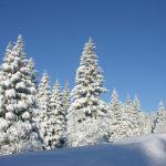 Zima - S Belij