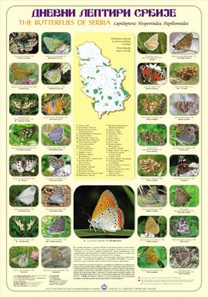 Dnevni leptiri Srbije