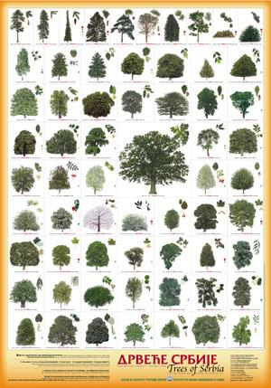 Drvece Srbije