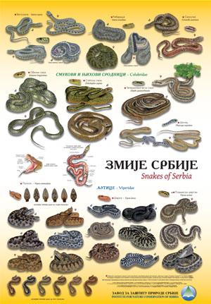 Zmije Srbije